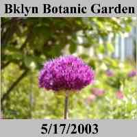 Brooklyn Botanical Garden - Brooklyn NYC